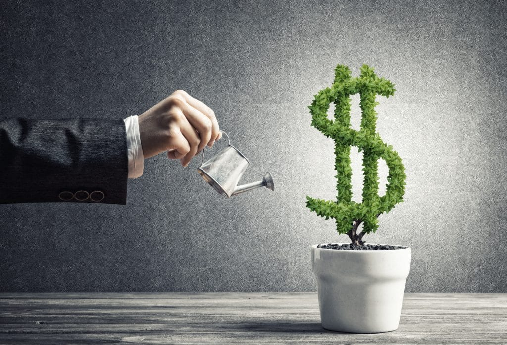 Man watering money tree in pot